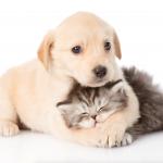 ¿Tienes un perro o gato? 7 cosas que no te pueden faltar
